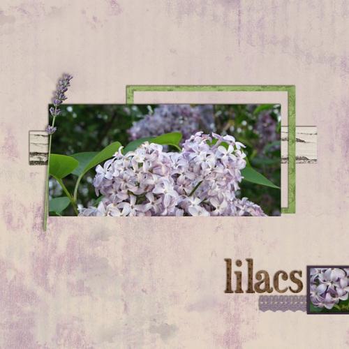 lilacs600